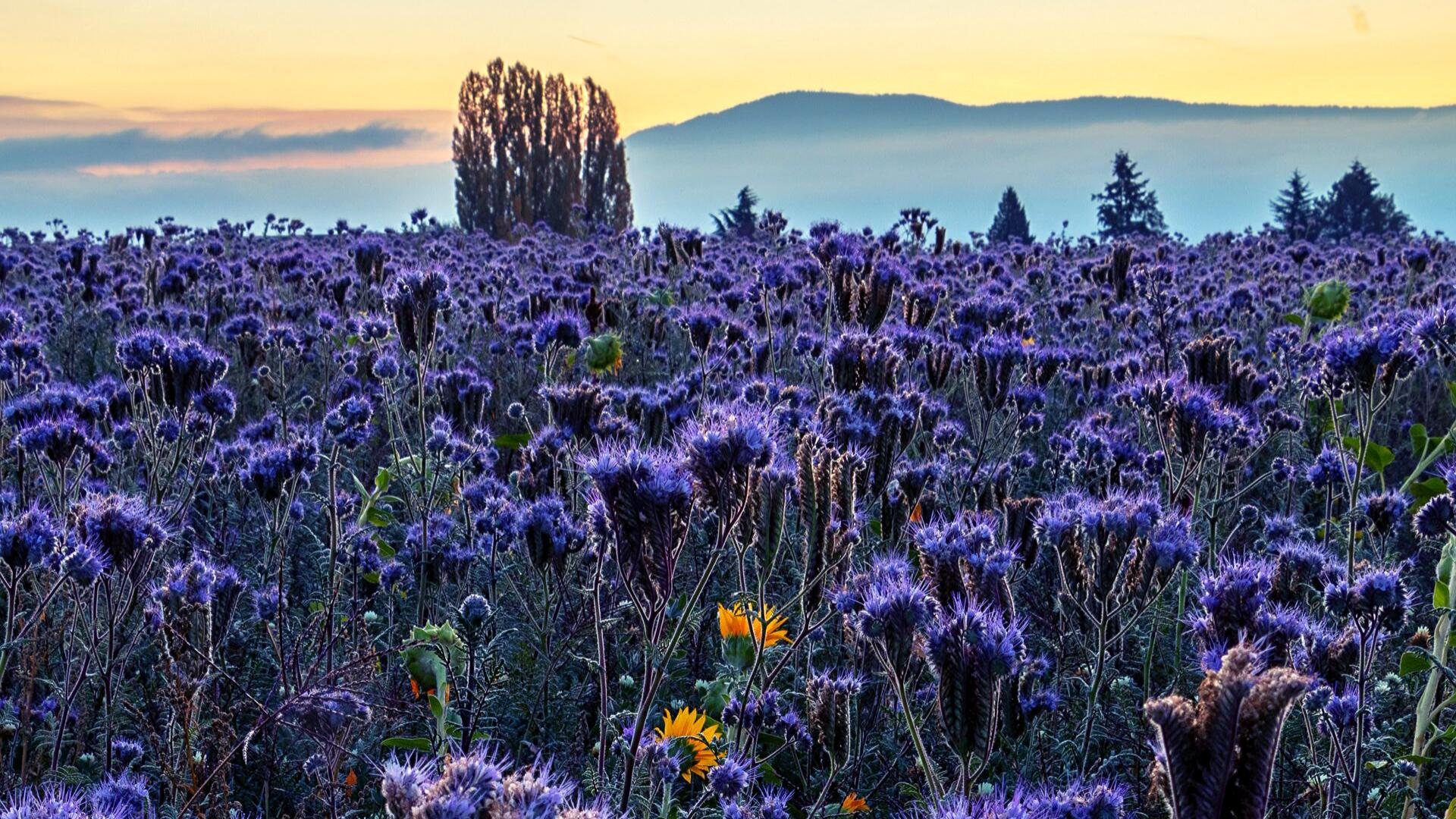 purple flowers in fall